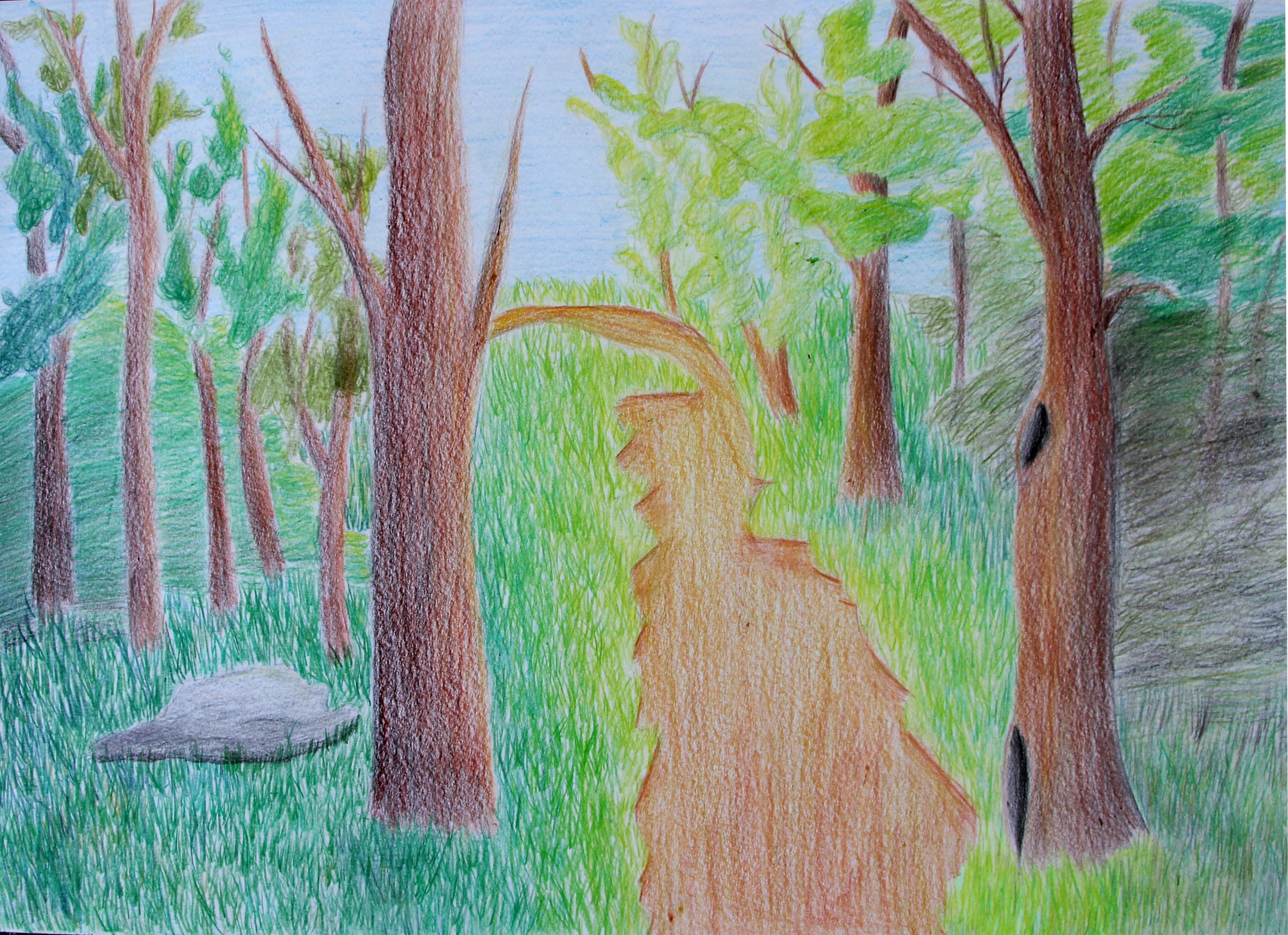 """""""Metsa väärtus on ilu"""""""