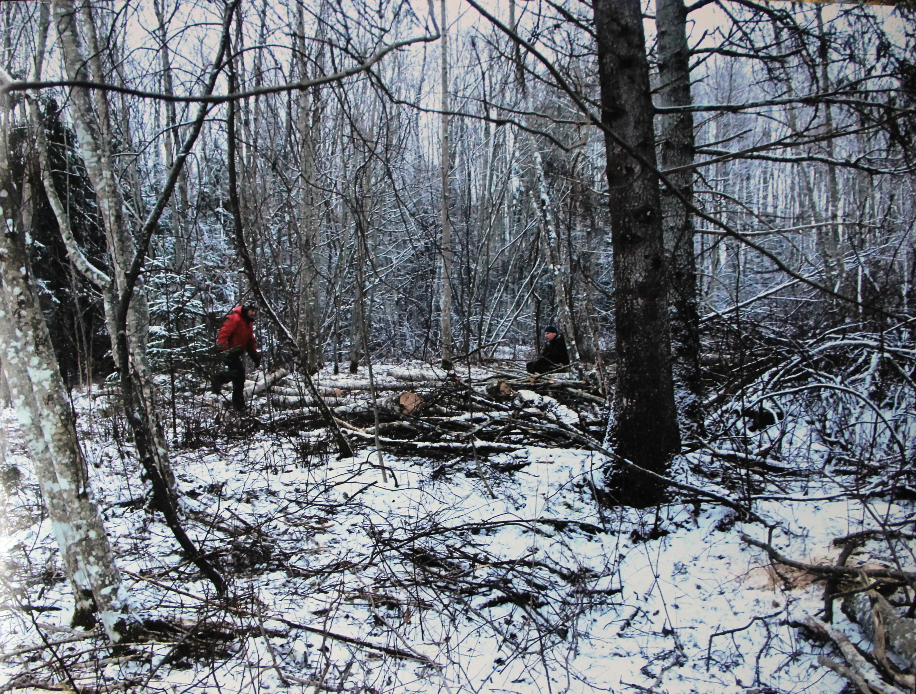 """""""Metsas askeldavad töömehed"""""""
