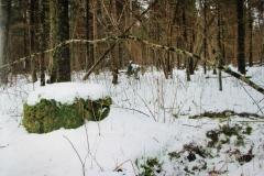 """""""Kabra magamisase looduslikus metsas"""""""