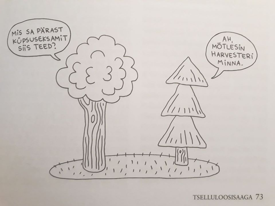 4//Pinetree Grand PUNCH-Pine tree
