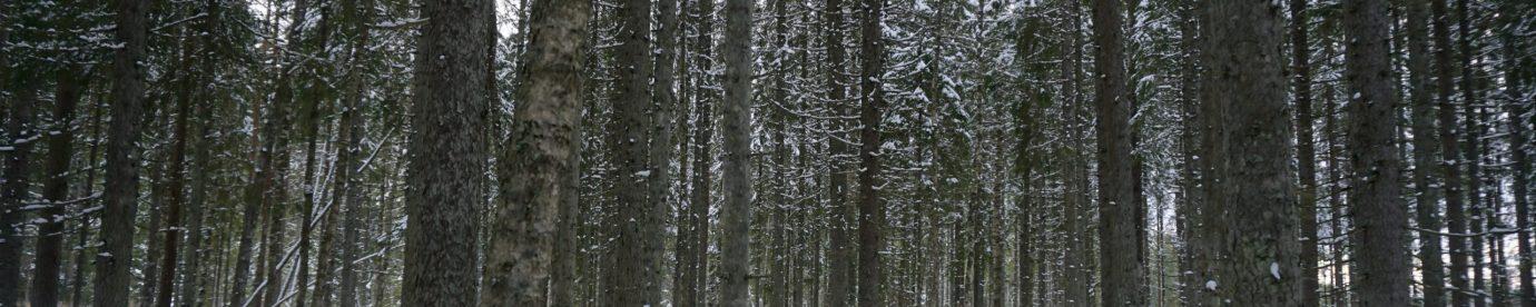 16.03.2020: ÜLE VIIE HEKTARI METSISE MÄNGUALASID LAGERAIEST PÄÄSTETUD!